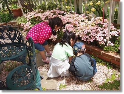 だんごむしと遊ぶ子供たち(^^; 左から、カブ子(4歳) 姪っ子(6歳) 新入社員クン家の次男クン(2歳)♪