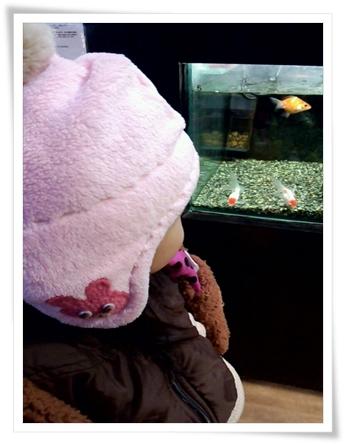 金魚見てるカブ子♪